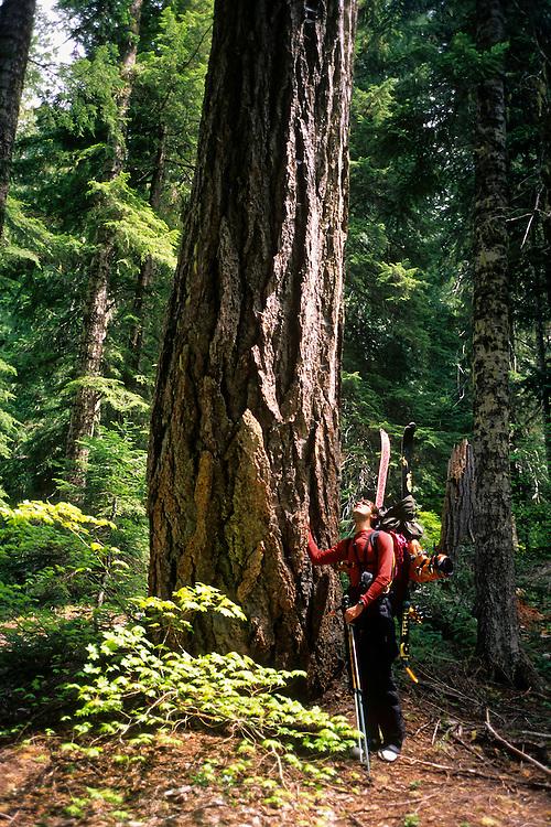 Old growth forest, Glacier peak wilderness, Cascades, June 2010