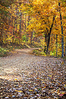 A country road in fall in the Ozark National Forrest in Arkansas.