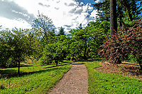 A beautiful summer day on the trails at the Portland Hoyt Arboretum, Oregon.