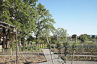 The geometric beds of a new garden are separated by neat gravel pathways