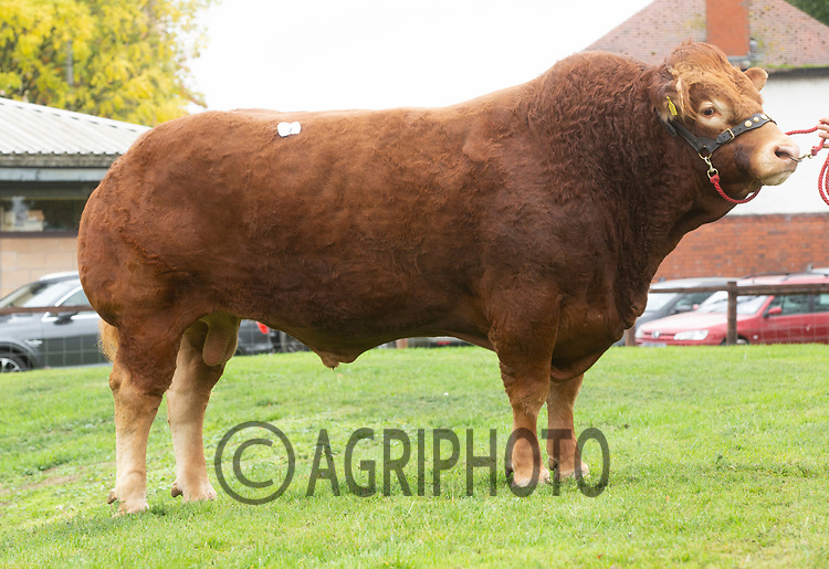Limousin Day, Newark Livestock Market<br /> Lot 1 Loosebeare Iain owned by A H & K J Booth sold for 9000gns<br /> ©Tim Scrivener Photographer 07850 303986<br />      ....Covering Agriculture In The UK....