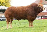 6.10.2018 Limousin Day Newark Livestock Market