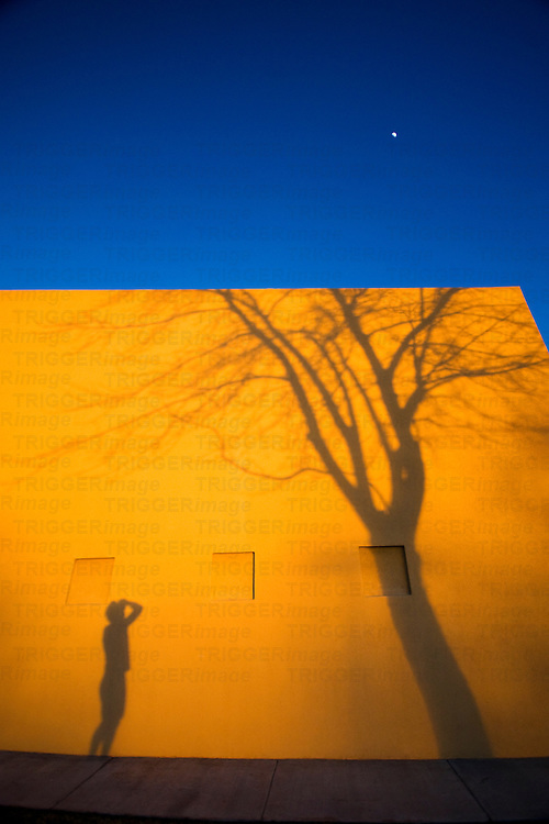 shadow of man and tree against side of building with moon in sky.  sunset light creates warm golden color contrasting the deep blue sky.  vertical composition taken in metro albuquerque, new mexico, usa.
