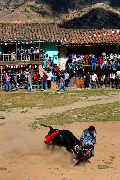 A young bullfighter is attacked by a wild bull during the Yawar Fiesta held in the mountains of Apurímac, Cotabambas, Peru, 30 July 2012. The Yawar Fiesta (Feast of Blood), an indigenous tradition which dates back to the time of the conquest, consists basically of an extraordinary bullfight in which three protagonists take part - a wild condor, a wild bull and brave young men of the neighboring communities. The captured condor, a sacred bird venerated by the Indians, is tied in the back of the bull which is carefully selected for its strength and pugnacity. A condor symbolizes the native inhabitants of the Andes, while a bull symbolically represents the Spanish invaders. Young boys, chasing the fighting animals, wish to show their courage in front of the community. However, the Indians usually do not allow the animals to fight for a long time because death or harm of the condor is interpreted as a sign of misfortune to the community.