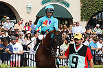 Derekson son of Brother Derek walking in the paddock at Del Mar Race Course in Del Mar, California on August 4, 2012.