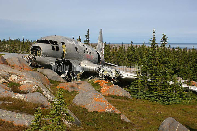 MISS PIGGY PLANE WRECK AT CHURCHILL, MANITOBA, CANADA This is a crashed C-46 aircraft that was operated by Lamb Air. She is found on the scenic route road along Hudson Bay shortly before it ends, close to the Institute of Arctic Ecophysiology. She is called Miss Piggy because she was able to hold so much freight and once did have pigs on board