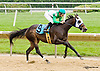 Distorted Disciple at Delaware Park racetrack on 6/14/14