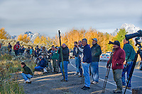 Photographers lined up to take picture of moose in Teton National Park, WY