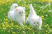 Marek, ANIMALS, REALISTISCHE TIERE, ANIMALES REALISTICOS, cats, photos+++++,PLMP2238,#a#