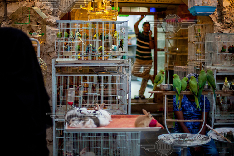 A pet shop worker makes a phone call at the Souq Waqif animal market.
