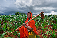 BRAC PROJECT, GPAF project (Global Poverty Action Fund). Agriculture project, women working in maize cornfields. Collective crop demonstration, 8 women 8 acres, work together to produce corn. Helena Maroda