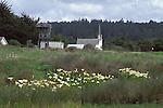 Presbytarian Church from Headlands with wild Calla Lillies, Mendocino California