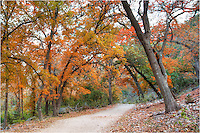 Each November, the leaves of the maple tree and oak change from green to orange and red. Here at Lost Maples State Park, the colors can be quite fetching, and a walk through the crisp Autumn air would certainly be in order. But go on the weekdays if you can... the crowds on the weekends when the colors are at peak can be a little off-putting!
