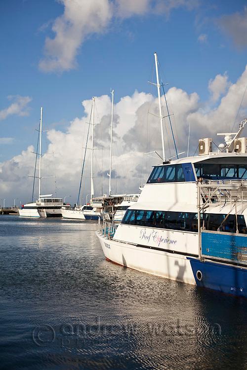 Dive boats moored at Marlin Marina.  Cairns, Queensland, Australia