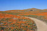 Antelope Valley California Poppy Reserve Vistor Center.  Text in bottom left.