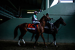 MAR 07: Hofburg and Flavien Prat before the Santa Anita Handicap at Santa Anita Park in Arcadia, California on March 7, 2020. Evers/Eclipse Sportswire/CSM