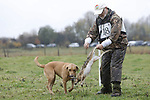 """Foto: VidiPhoto<br /> <br /> DOORWERTH – In de weilanden rond kasteel Doorwerth in de gelijknamige plaatsen, strijden maandag achttien jachthonden om de titel""""Beste jachthond van Nederland"""". De zogenoemde Nimrod wordt jaarlijks georganiseerd waar achttien honden na een voorselectie aan deel mogen nemen. Iedere jachthond mag slechts eenmaal in zijn leven meedoen aan Nimrod. Van ieder jachthondenras wordt alleen de best presterende hond gevraagd om mee te doen. In totaal doen er elf verschillende rassen mee die in drie verschillende nagebootste jachtsessie het 'geschoten' wild moeten binnenhalen. De soorten wild zijn vooraf aangeschaft via een poelier. Goed opgeleide jachthonden zijn onmisbaar voor de weidelijke jacht in Nederland. Een goede jachthond speurt het wild op en haalt het geschoten wild. Daarbij moeten zij zich niet door barrières van water, riet, struiken et cetera laten hinderen, ze moeten de instructies van hun baas direct en goed opvolgen maar de jachthonden moeten ook zelfstandig kunnen werken. Nimrod trekt ieder jaar duizenden bezoekers uit binnen- en buitenland. Foto: De vermoedelijke winnaar is Ed Booter (man met witte pet) met zijn labrador Kate."""