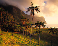 Kentia Palms & Mts. Gower & Lidgbird, Lord Howe Island, New South Wales, Australia   UNESCO World Heritage Site