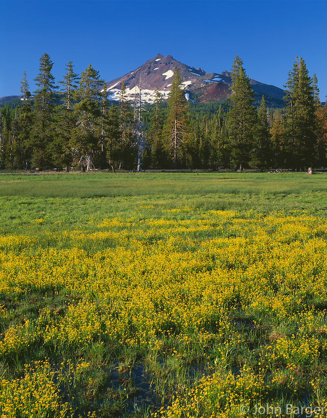 ORCAC_162 - USA, Oregon, Deschutes National Forest, Broken Top rises above coniferous forest and meadow of subalpine buttercup.