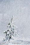 A small tree sits in the snow.