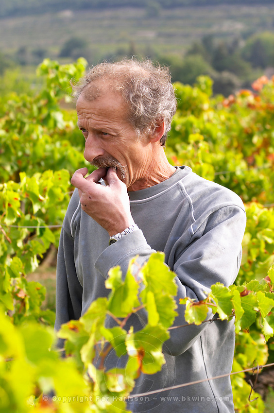 Christian Vache, owner and winemaker. Tasting a grape.  Domaine la Monardiere Monardière, Vacqueyras, Vaucluse, Provence, France, Europe