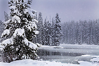 Snowstorm, Sylvan Lake, Yellowstone National Park.