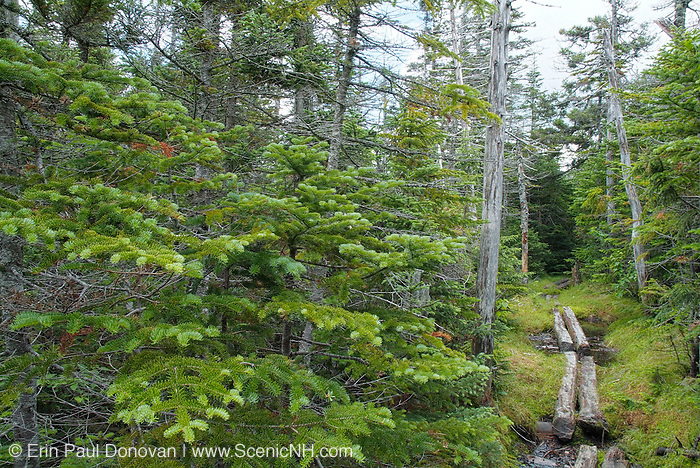 Puncheons in a wet area along the Pine Link Trail in the White Mountains of New Hampshire USA.