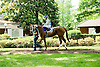 Gleaming before The Sweet and Sassy Stakes at Delaware Park on 6/23/12