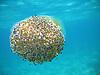 Jellyfish in the Mediterranean Sea<br /> <br /> Medusa en el Mar Mediterraneo<br /> <br /> Qualle im Mittelmeer<br /> <br /> 2048 x 1536 px<br /> 150 dpi: 34,68 x 26,01 cm<br /> 300 dpi: 17,34 x 13 cm