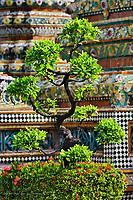 Bonsai tree in front of chedi, Wat Pho, Bangkok, Thailand