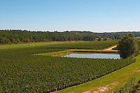 A view over the vineyard, a pond for water control and horses in the background - Château Pey la Tour, previously Clos de la Tour or de Latour, Bordeaux, France