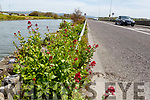 Wild flowers on the Canal Road from Blennerville to Tralee on Tuesday morning.