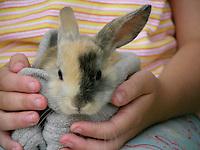 Zwergkaninchen, Zwerg-Kaninchen, Jungtier in den Armen eines Mädchens, Kindes, dwarf rabbit