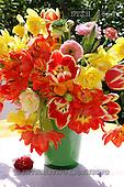 Helga, FLOWERS, nature  photos, DTTH3664,#F# Blumen, Natur, flores, naturaleza