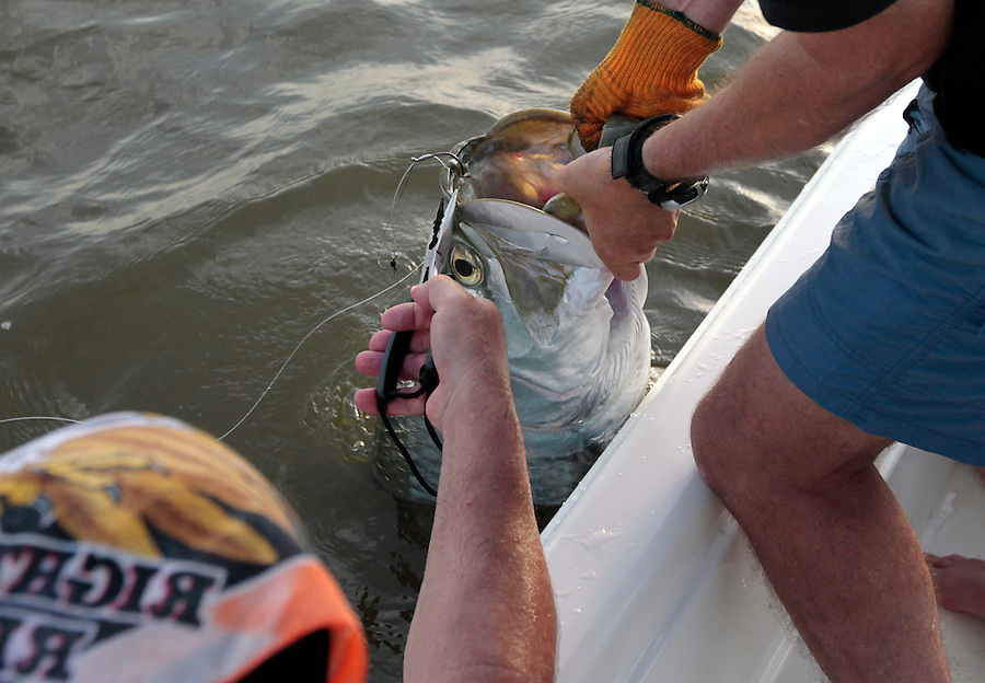 Capt. Tom Shurtleff lifts the large tarpon allowing Steve Scalish the honor of unhooking the giant tarpon in Florida's Everglades National Park out of Chokoloskee Island and the 10,000 Islands National Wildlife Refuge. Photo/Andrew Shurtleff