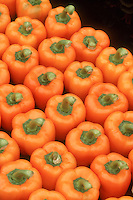 Rows of orange bell peppers vegetables harvested and ready to eat, full of carotene and antioxidants, a healthy fresh food from the garden, sweet peppers