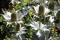 Cambridge University Botanic Garden, Cambridge, UK on July 30th 2020<br /> <br /> Photo by Keith Mayhew
