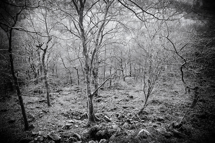 Bare trees in Winter, Calderdale, West Yorkshire.