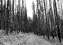 Scenery at Blewett Pass, WA in black and white featuring old burned forest and logging road in the Wenatchee Mountains. Stock photography by Olympic Photo Group