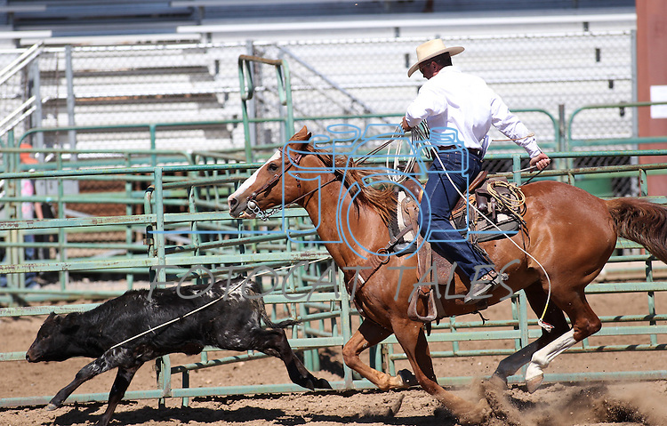 Nick Uhart competes in the calf roping event at the Minden Ranch Rodeo on Sunday, July 24, 2011, in Gardnerville, Nev. .Photo by Cathleen Allison