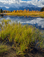 Grand Teton National Park, WY: Grasses on the shoreline of the Snake River with reflections of fall colors and cloud covered Teton Range.