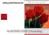 Alfredo, FLOWERS, BLUMEN, FLORES,  photos+++++,BRTOAP22702015152,#F#