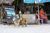 Beach dogs having fun.