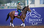 DEL MAR, CA - NOVEMBER 02: Capla Temptress, owned by Team Valor LLC and trained by William I. Mott, exercises in preparation for Breeders' Cup Juvenile Fillies Turf at Del Mar Thoroughbred Club on November 2, 2017 in Del Mar, California. (Photo by Kazushi Ishida/Eclipse Sportswire/Breeders Cup)