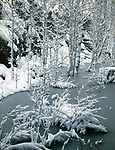 Winter Forest with creek,Coconino National Forest,Arizona
