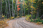 Colorful fall foliage along the dirt road leading to the Crisp Point Lighthouse, Michigan, Upper Peninsula, USA