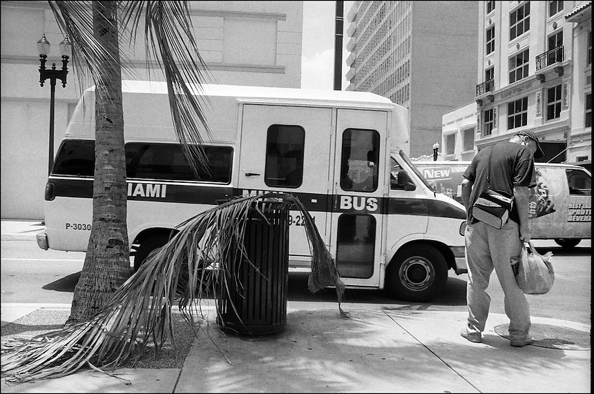 Palm Leaf<br /> from &quot;Walking Downtown&quot; series.<br /> Miami, Florida, 2010