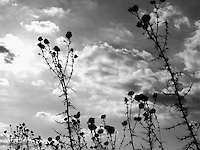 """Black & white fine art stock image of shrubs silhouette against clouds and sky.<br /> <br /> View the gallery - """"Conceptual - Nature"""" for the color version of this image."""