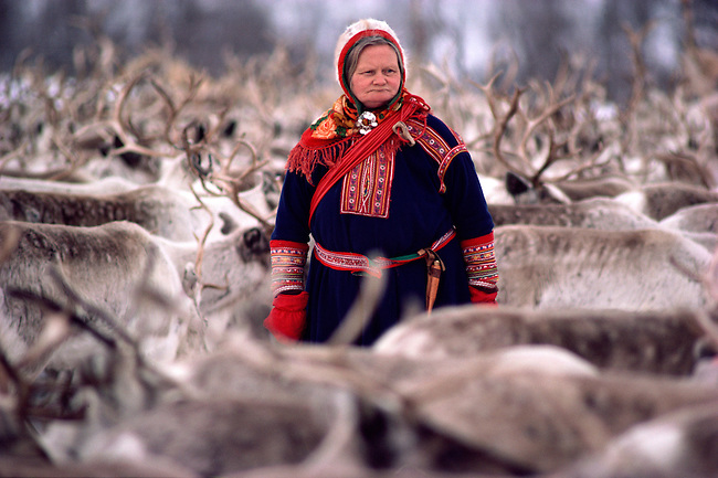 Sami woman herder, Marit, among her reindeer before the spring migration. Kautokeino. North Norway.