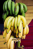 JAMAICA, Port Antonio. Bananas hanging at the Willow Wind Bar.